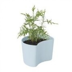 RIG-TIG YOUR TREE Blumentöpfe mit Samen blau