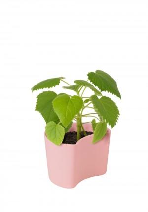 RIG-TIG YOUR TREE Blumentöpfe mit Samen pink