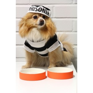magisso Pet Bowl Wassernapf L orange