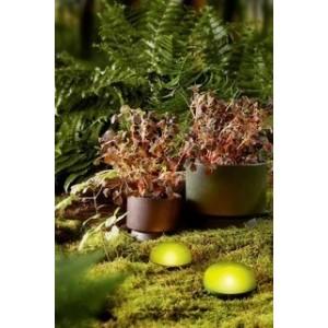 Rosendahl Soft Spot LED 11 cm olivgrün